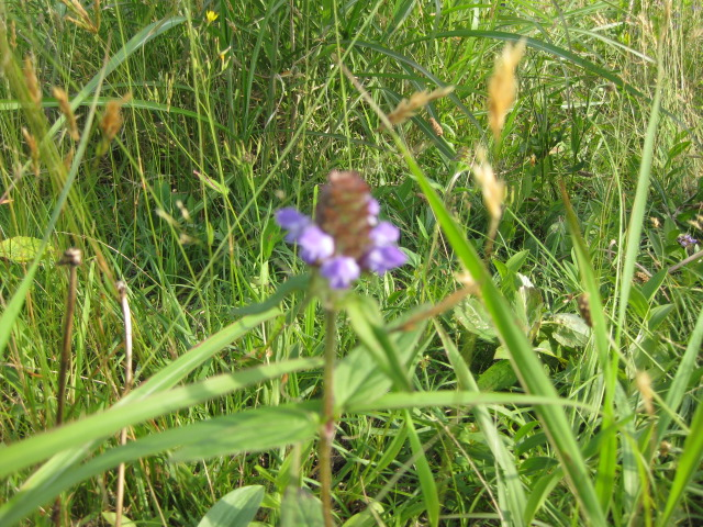 寒風山の花写真