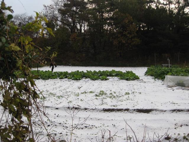 雪が...写真